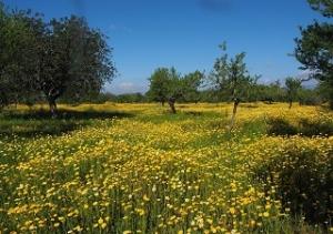 Positive Habit - Compassion - Meadow
